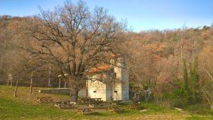 chiesa-e-quercia